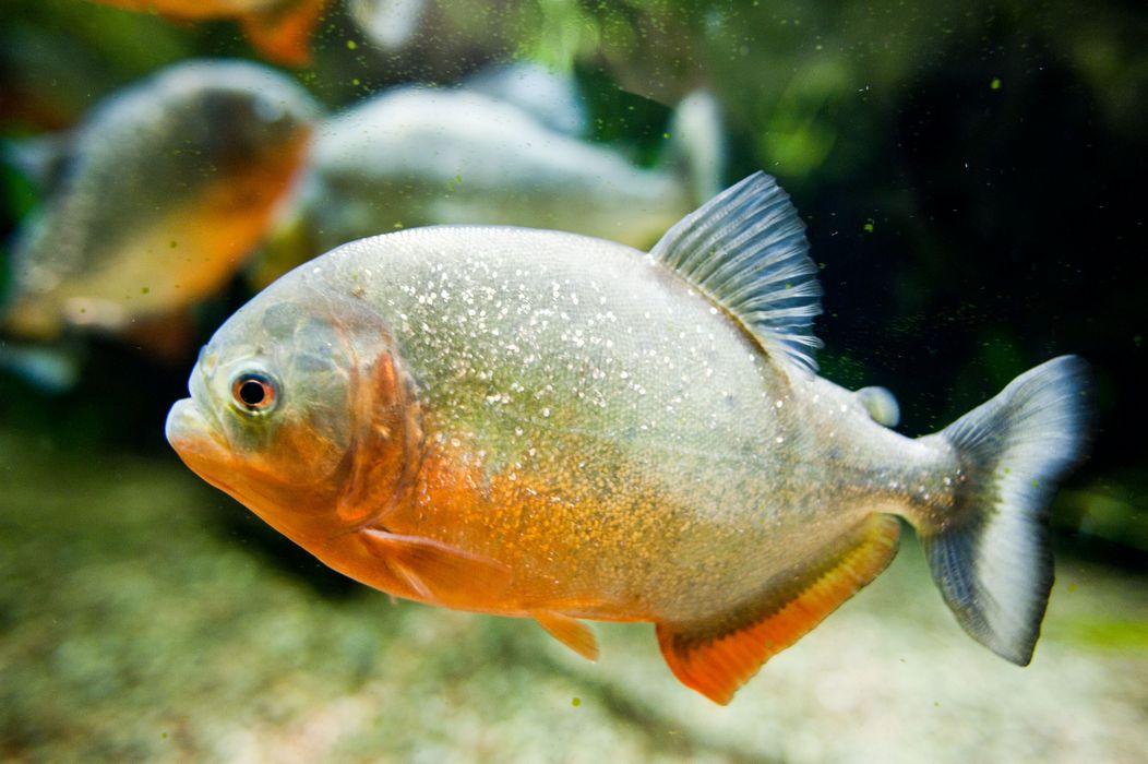 Gdzie Jest Nemo W Gdyni Portalmorskipl